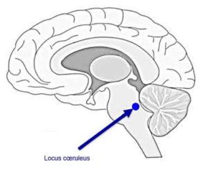 France-Hypnose-Formation : tabac et neurosciences
